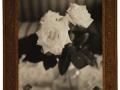 Roses,OO