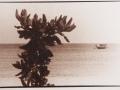 Arbusto mar y barco
